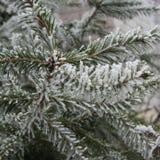 Djupfrysta trädvisare Royaltyfri Fotografi