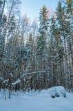 Djupfrysta trän under snö arkivfoton