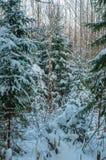 Djupfrysta trän under snö arkivfoto