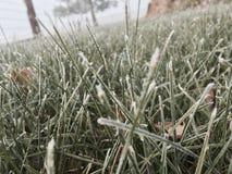 Djupfrysta trådar av gräs Royaltyfria Bilder