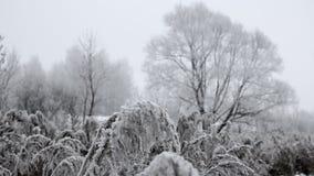 Djupfrysta växter som täckas med frost Arkivbilder