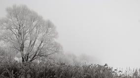 Djupfrysta växter som täckas med frost Royaltyfria Foton
