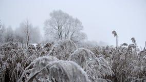 Djupfrysta växter som täckas med frost Fotografering för Bildbyråer
