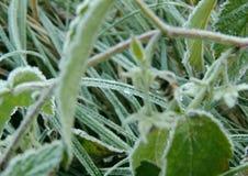 Djupfrysta växtsidor på den bästa sikten för vintermorgon Arkivbild