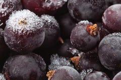 Djupfrysta vinbärbär Blåbär Arkivfoto