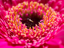 Djupgående blick av en rosa blomma Arkivbilder