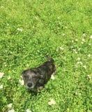 Djupt gräs för liten hund Royaltyfri Fotografi