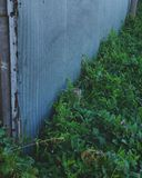 Djupt - gräsplan Arkivfoton