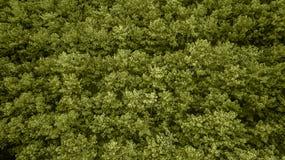 Djupt - gräsplan sörjer överträffar Trend av ?ret F?rgen av ?ret 2019 fotografering för bildbyråer