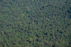 Djupt - grön bakgrund för textur för skogdjungelträd Fotografering för Bildbyråer