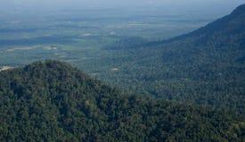 Djupt - grön bakgrund för textur för skogdjungelträd arkivfoton
