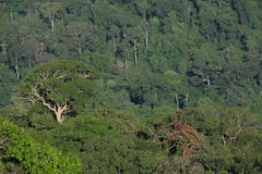 Djupt - grön bakgrund för textur för skogdjungelträd royaltyfria foton
