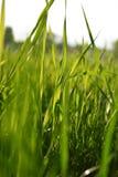 Djupt - grönt gräs på fältet arkivbilder