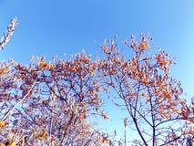 djupt grunt fälthav för buckthorn Arkivfoton