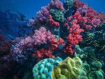 Djupt hav och korallrev, färgrika koraller i havlandskap arkivbild