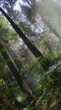 Djupt in i den glänsande skogen Arkivfoto
