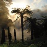 Djupt i en djungel Arkivbild