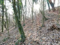 Djupt i träna, vinterstrålar av solen som bryter till och med träden royaltyfri bild