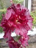 Djupt - röd blomma royaltyfri foto