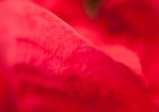 Djupt - rosa bakgrund royaltyfri fotografi