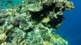 Djupt under vattensikten av korallreven som tänds av solljus, ultrarapid stock video