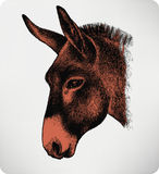 Djur åsna, hand-teckning också vektor för coreldrawillustration Royaltyfri Fotografi