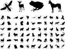 djur Royaltyfria Foton
