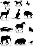 djur Arkivbilder