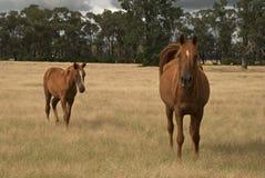djur Royaltyfri Fotografi