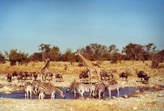 djur Arkivfoto