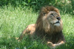 djur Royaltyfri Foto