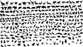 djur Fotografering för Bildbyråer