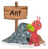 Djur alfabetbokstav A för myra Arkivbild