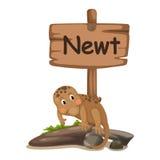 Djur alfabetbokstav N för newt Fotografering för Bildbyråer