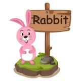 Djur alfabetbokstav R för kanin Arkivbilder