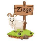 Djur alfabetbokstav z för ziege Arkivfoton