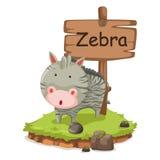 Djur alfabetbokstav z för sebraillustration Arkivfoto