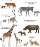 Djur av Afrika med gröngölingar Arkivfoton