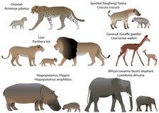 Djur av Afrika med gröngölingar Royaltyfri Bild