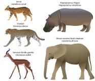 Djur av den Afrika servalen, gepard, gerenuk, flodhäst, elefant Arkivfoton