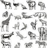 Djur av den afrikanska kontinenten royaltyfri illustrationer