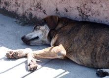 Djur av Kuban Royaltyfria Foton