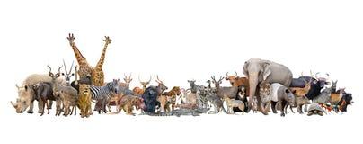 Djur av världen Arkivfoto
