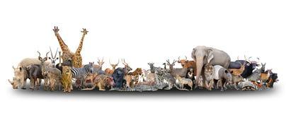 Djur av världen Royaltyfri Foto