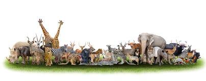 Djur av världen Arkivfoton