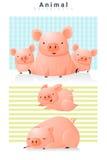 Djur bakgrund med svin Fotografering för Bildbyråer
