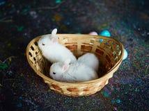 djur behandla som ett barn roliga husdjur för tecknad filmtecken Fotografering för Bildbyråer