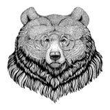 Djur bild för grisslybjörnHipsterstil för tatueringen, logo, emblem, emblemdesign vektor illustrationer