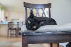 Djur bred vinkel för svart katt Royaltyfri Fotografi