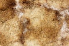 djur brownclosepäls upp Fotografering för Bildbyråer